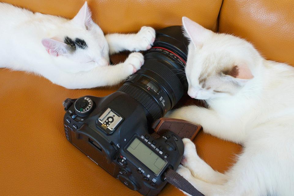 Katte med kamera