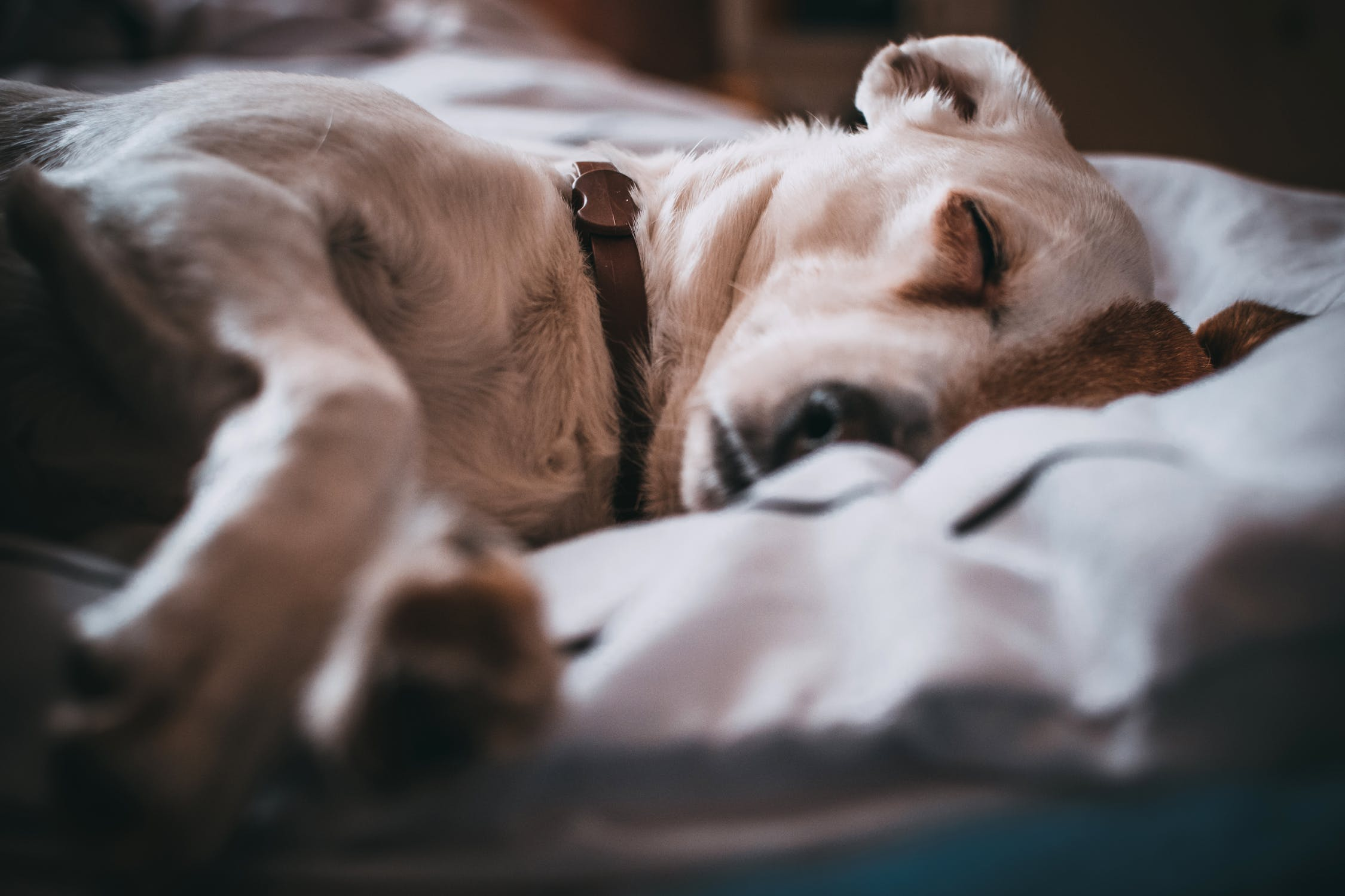 Faste regler er vigtige for kæledyr